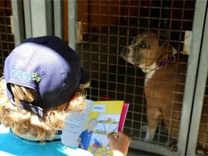 Child reading to a rescue dog at RSPCA School Holiday Program