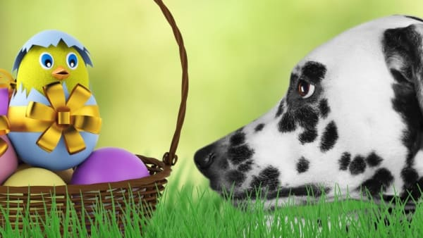 RSPCA WA warns Easter treats can be toxic to pets